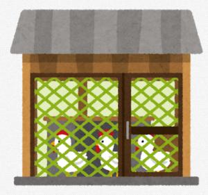 飼育小屋のニワトリたち